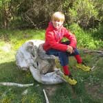 finn elephant skull