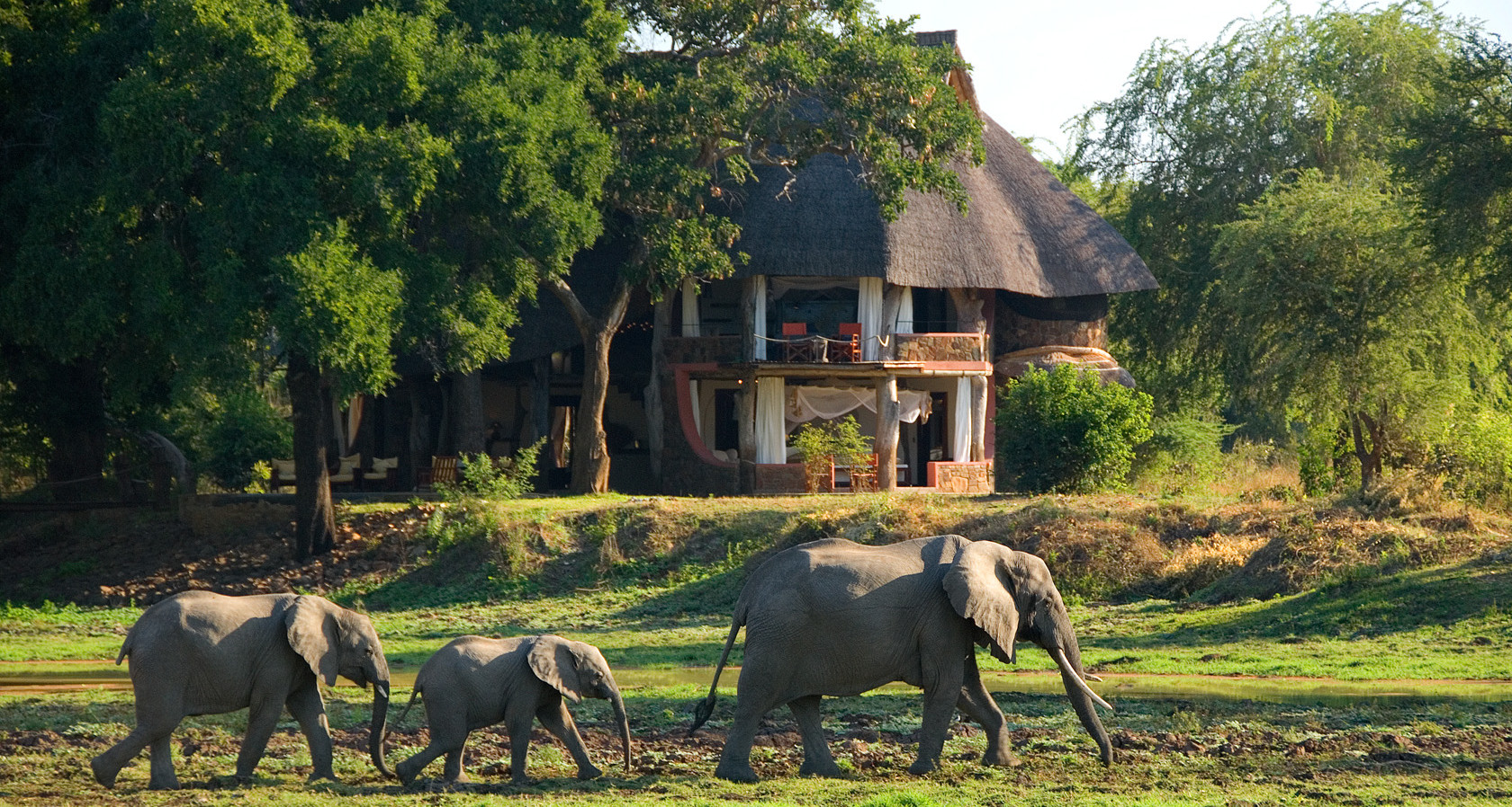 Luxury African Safari Tour Operadores