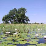 at peace in the okavango delta