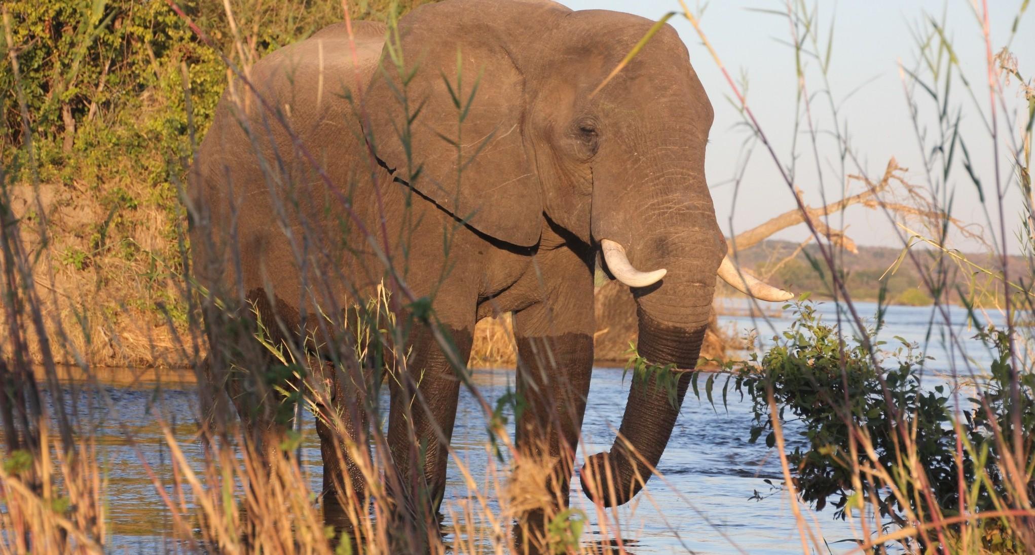Tami Berczuk Zambezi River Victoria Falls