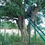 Parachute Pan Treehouse