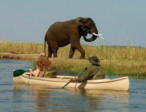 Canoe Safari-Zambezi River, Zambia