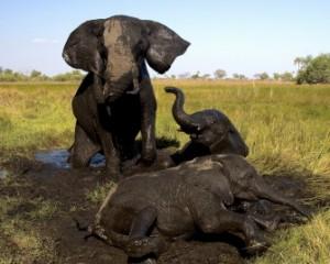 elephantsresize