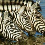 african_safari_namibia.jpg