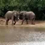Kanga Pan Elephant