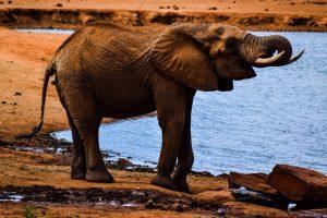 The Big 5 - elephant